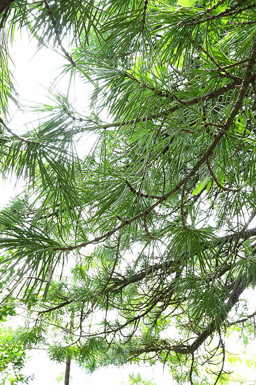 17-06-11_nagisodake-nagano_00131.jpg