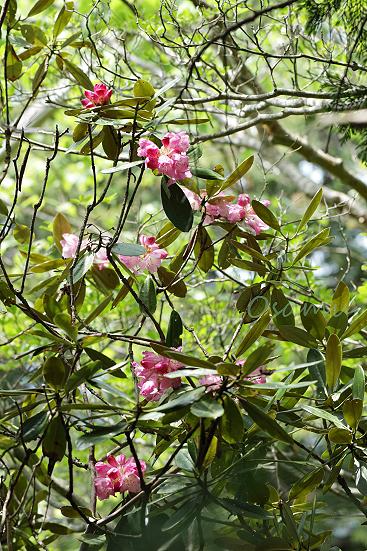 17-06-11_nagisodake-nagano_00179.jpg