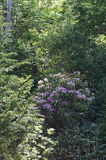 17-06-11_nagisodake-nagano_00479.jpg