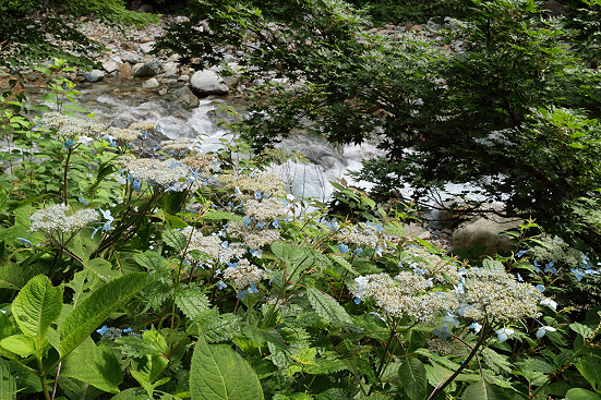 17-08-03_naebayama-nigata_00086.jpg