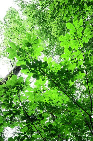 17-08-03_naebayama-nigata_00108.jpg