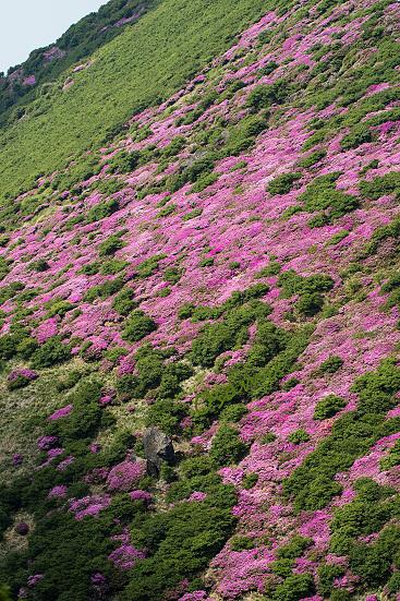 三又山ミヤマキリシマ
