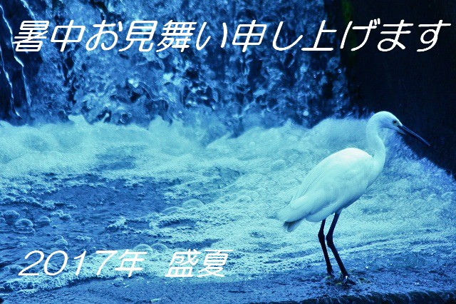 IMG_9485 (2)