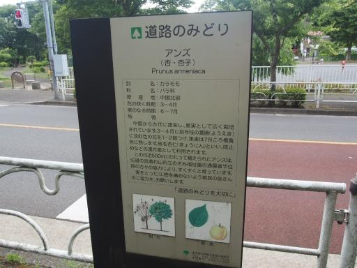 20170604・武蔵村山の秘密基地1-18・中