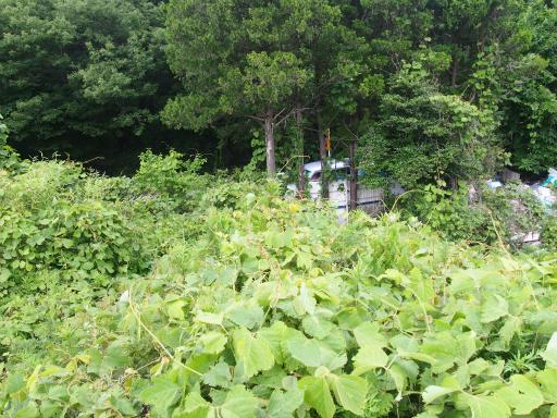 20170604・武蔵村山の秘密基地3-17・多摩湖周回道路
