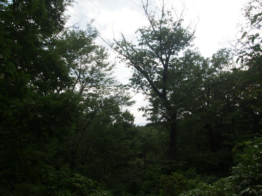 20170604・武蔵村山の秘密基地4-09