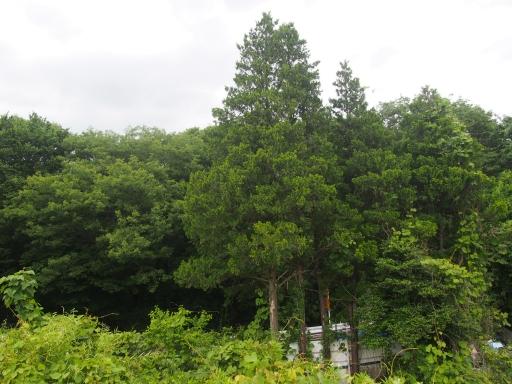20170604・武蔵村山の秘密基地空22・赤坂の頭