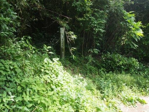 20170611・久々の緑の森1-12・トンボの湿地・大