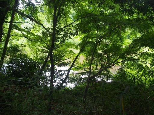 20170611・久々の緑の森1-08