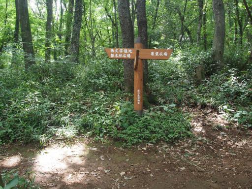 20170611・久々の緑の森1-15