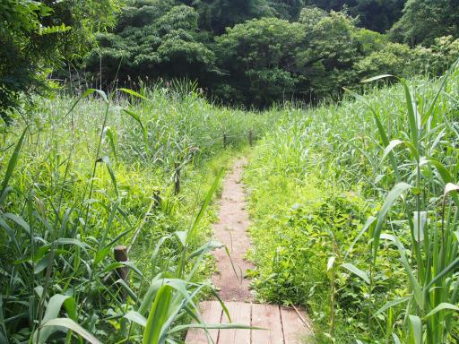 20170611・久々の緑の森1-13