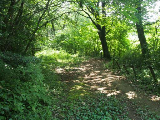 20170611・久々の緑の森2-05