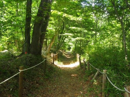 20170611・久々の緑の森2-01
