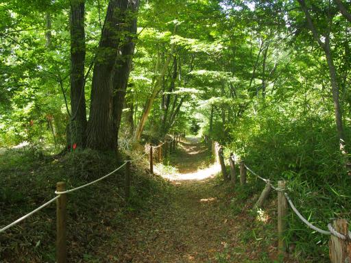 20170611・久々の緑の森空09・雑木林付近木漏れ日