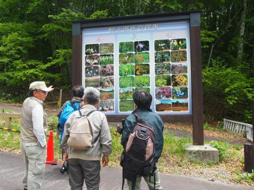 20170618・湿原とヒメサユリの旅1-16