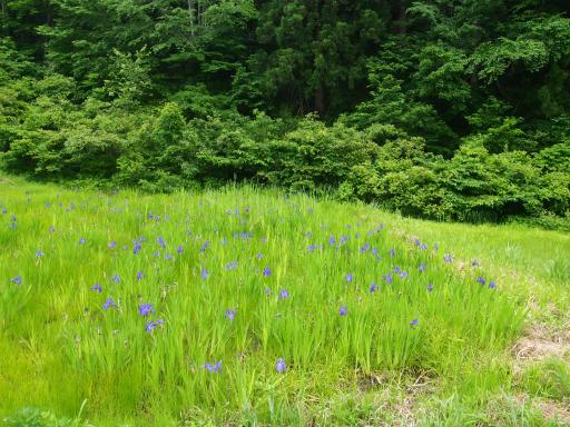 20170618・湿原とヒメサユリの旅4-07・宮床へ向う途中