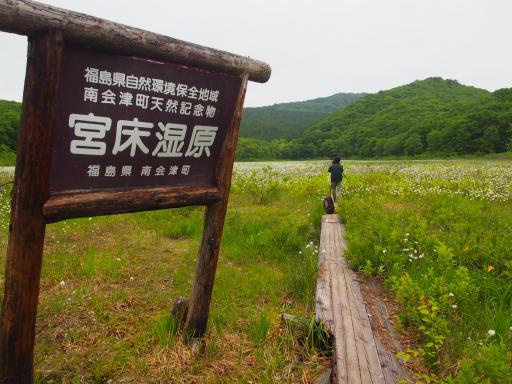 20170618・湿原とヒメサユリの旅4-17
