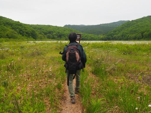 20170618・湿原とヒメサユリの旅4-15