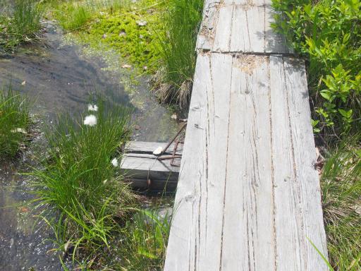 20170619・湿原とヒメサユリの旅7-11