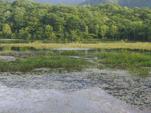 20170619・湿原とヒメサユリの旅9-12