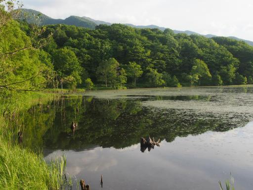 20170619・湿原とヒメサユリの旅9-24