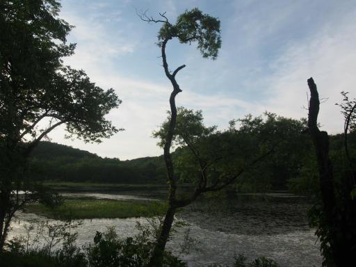 20170619・湿原とヒメサユリの旅9-28