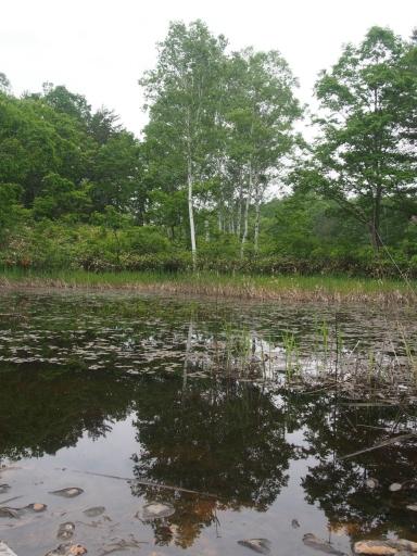 20170618・湿原とヒメサユリの旅特大画像3