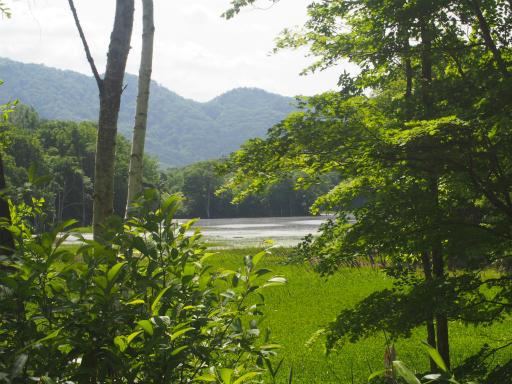 20170619・湿原とヒメサユリの旅8-33(9~10)