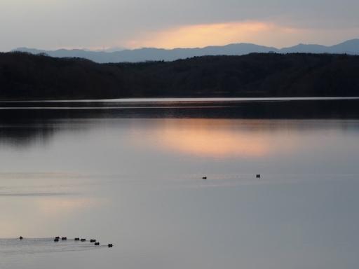 20170218・マガモの湖