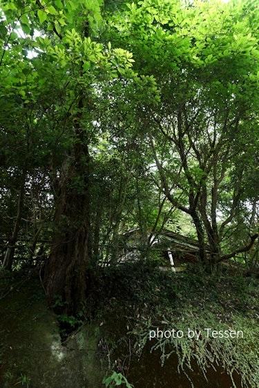 DSC00182正木