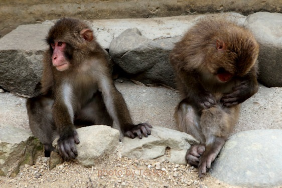 IMG_8165猿