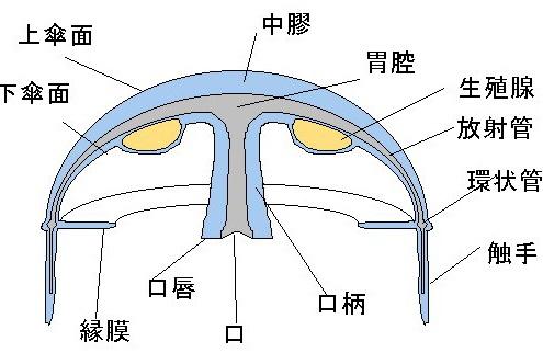 bodyplan.jpg