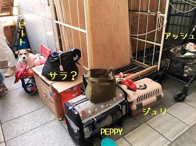 2017_05_06h07_5.jpg