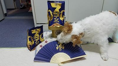 koikeya_12.jpg