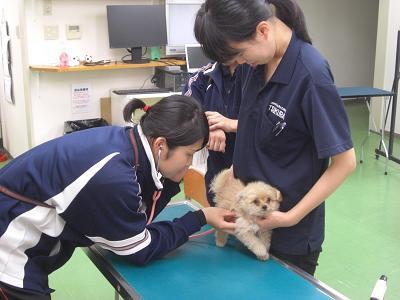 基礎獣医学