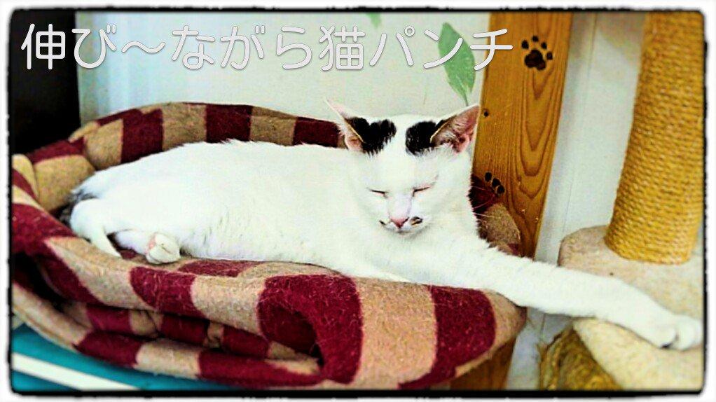 パールさん作 伸びながら猫パンチ