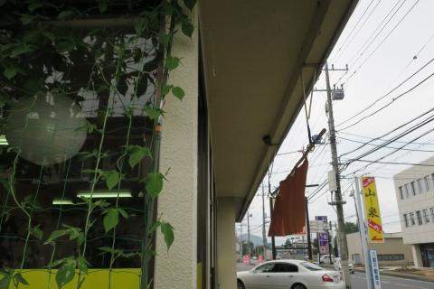 「山泉の小ツバメ&朝顔のグリーンカーテン」 (2)