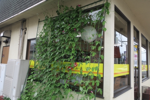 「山泉の小ツバメ&朝顔のグリーンカーテン」 (6)