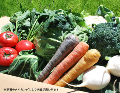 北海道産・新鮮野菜セット(7品目)をプレゼント!