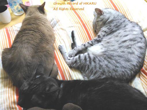 hikaru&rayleigh&vivace 6