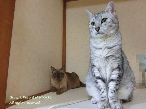 hikaru&rayleigh 62