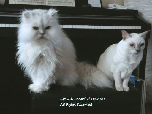 yutaka&miu 68