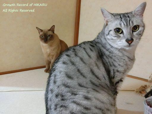 hikaru&rayleigh 64
