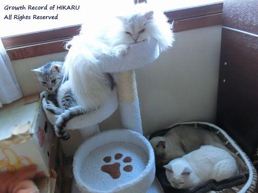 yutaka&hikaru&miu&rayleigh 16