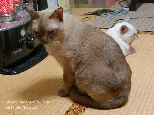hikaru&miu 371