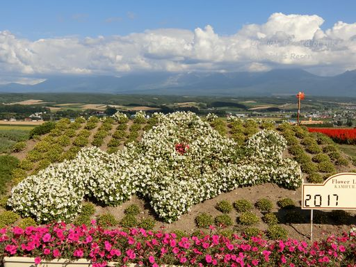 flowerland kamifurano 3