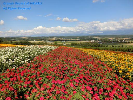 flowerland kamifurano 5