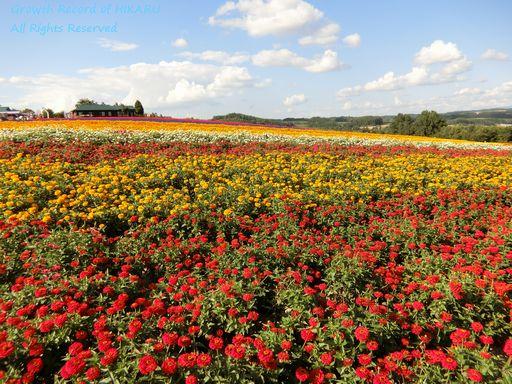 flowerland kamifurano 2
