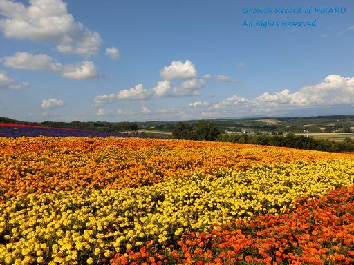 flowerland kamifurano 1