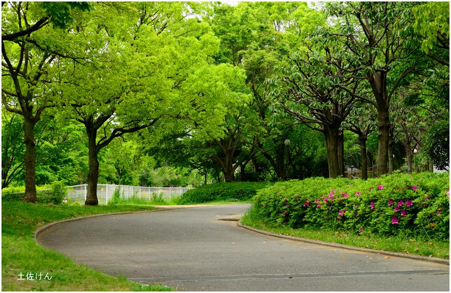 鶴見緑地1